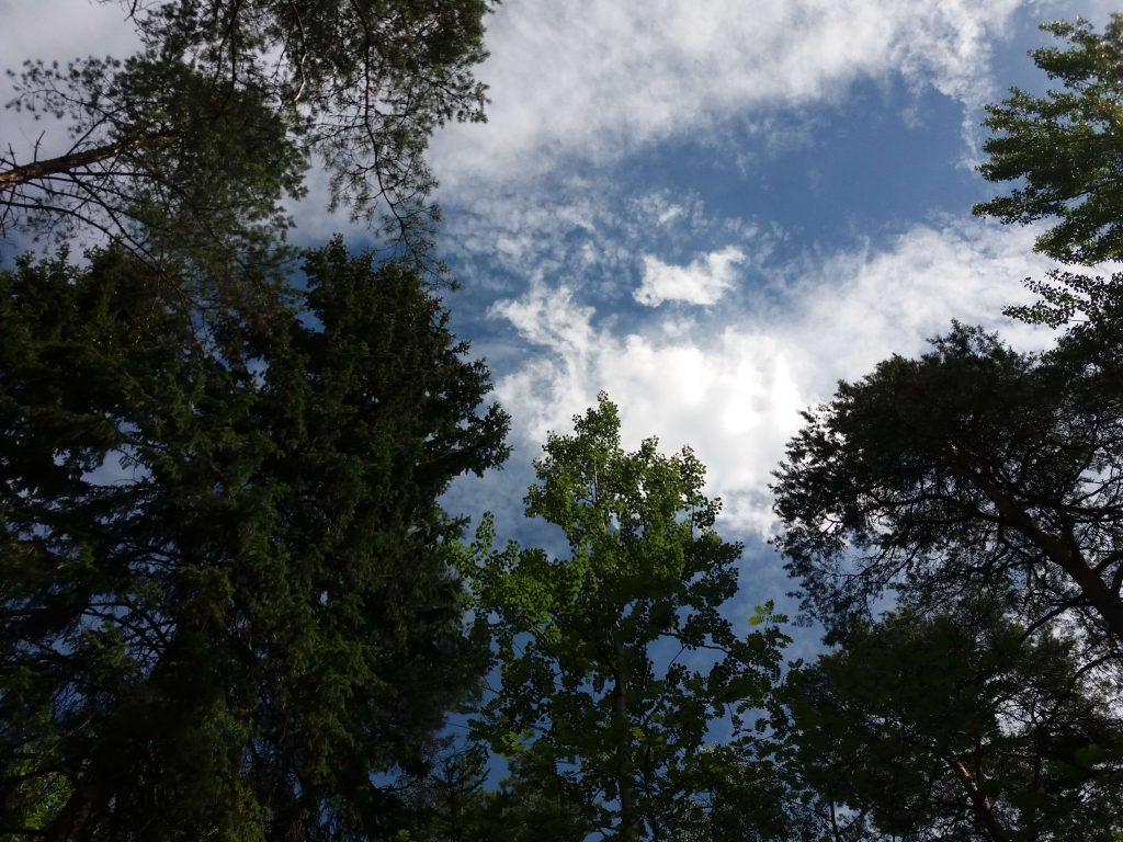 Bild tagen från marken upp på himmel och träd