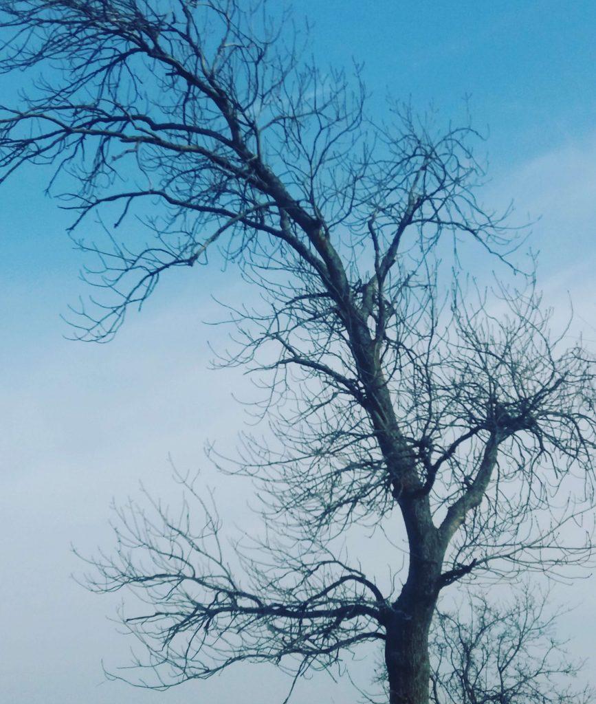 Ett naket vårträd mot en ganska blå himmel får illustrera inlägget om passiva inkomster